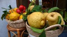 the world's best lemons come from the amalfi coast, campania. italian gouremt travel - jane gifford's exclusive photographic travel guide to italy